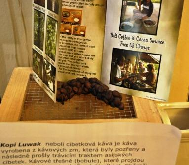 model of Kopi Luwak